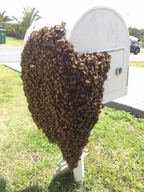 The bees on the mailbox