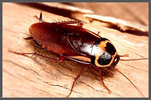 A Cockroach.