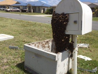 bees being transported