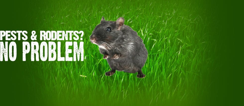 Pests & Rodents No Problem