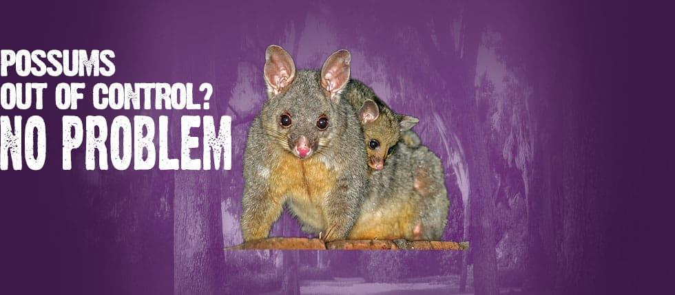 Pesky Possum Pest Control