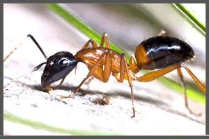 An Ant. Pesky Possum Pest Control