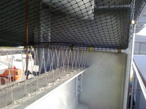 Bird netting and spiking used in combination to render problem on a large industrial building.