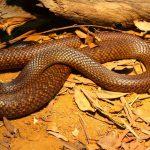 Pesky Possum Pest Control Snake