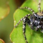 Pesky Possum Pest Control spider