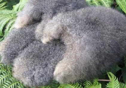 possum fur slippers