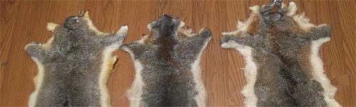three possum fur on the floor