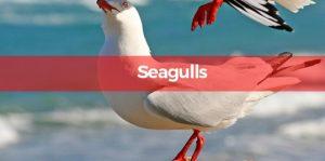 seagull Pesky Possum Pest Control