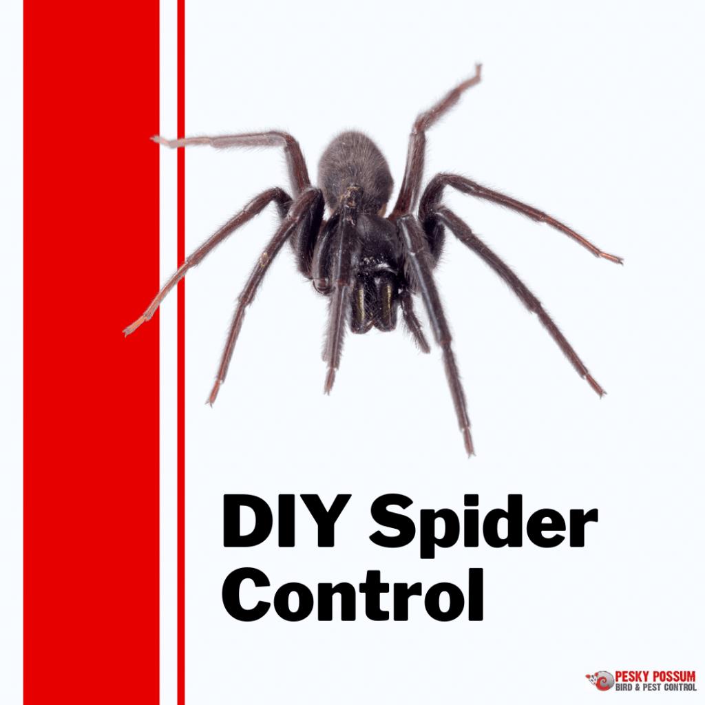 DIY Spider Control