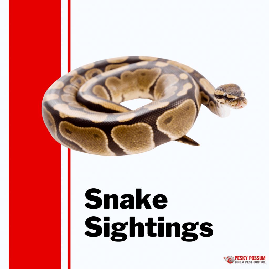 Snake Sightings Brisbane