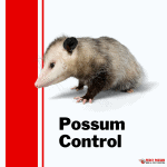 How to stop possums living in roof
