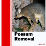 Pesky Possum Bird & Pest Control   Possum Removal in Brisbane