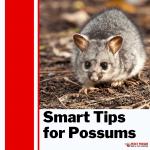 Pesky Possum Bird & Pest Control   Smart Tips for Possums