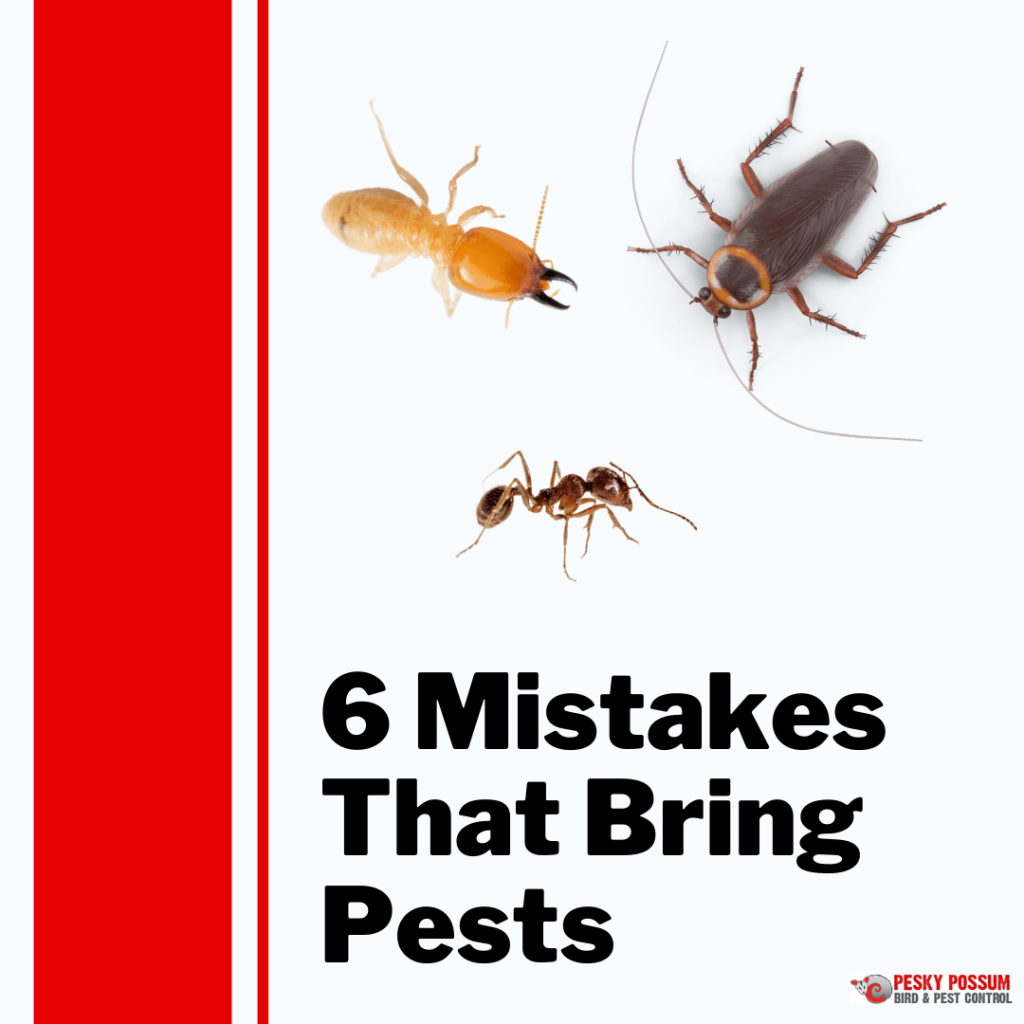 6 Mistakes That Bring Pests