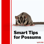 Smart tips for Possums