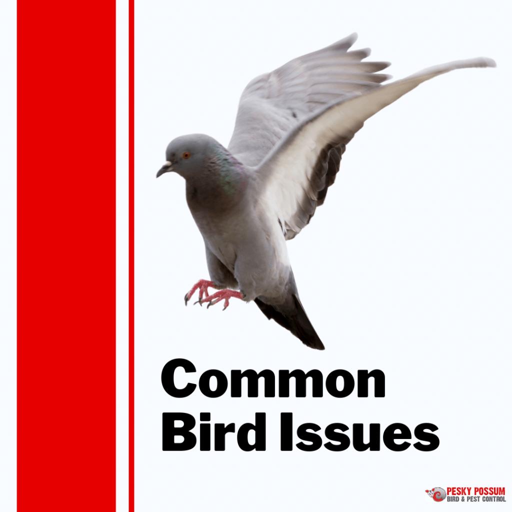 Pesky Possum Bird & Pest Control | Common Bird Problems to Look Out For