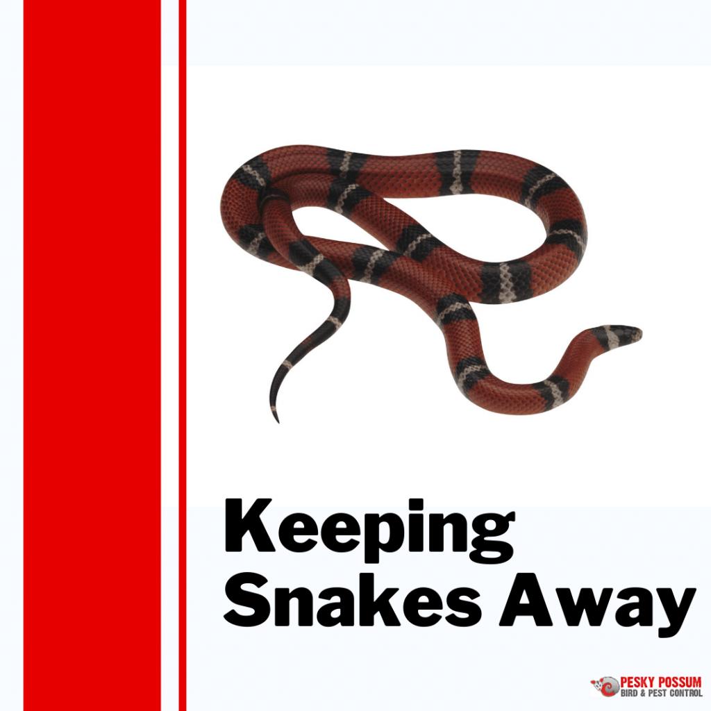 Pesky Possum Bird & Pest Control | Keeping Snakes Away
