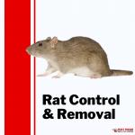 Pesky Possum Bird & Pest Control | Brisbane Rat Control and Removal