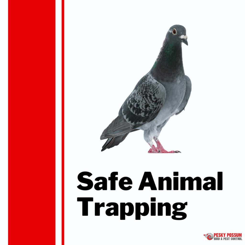 Pesky Possum Bird & Pest Control | Brisbane Animal Trapping
