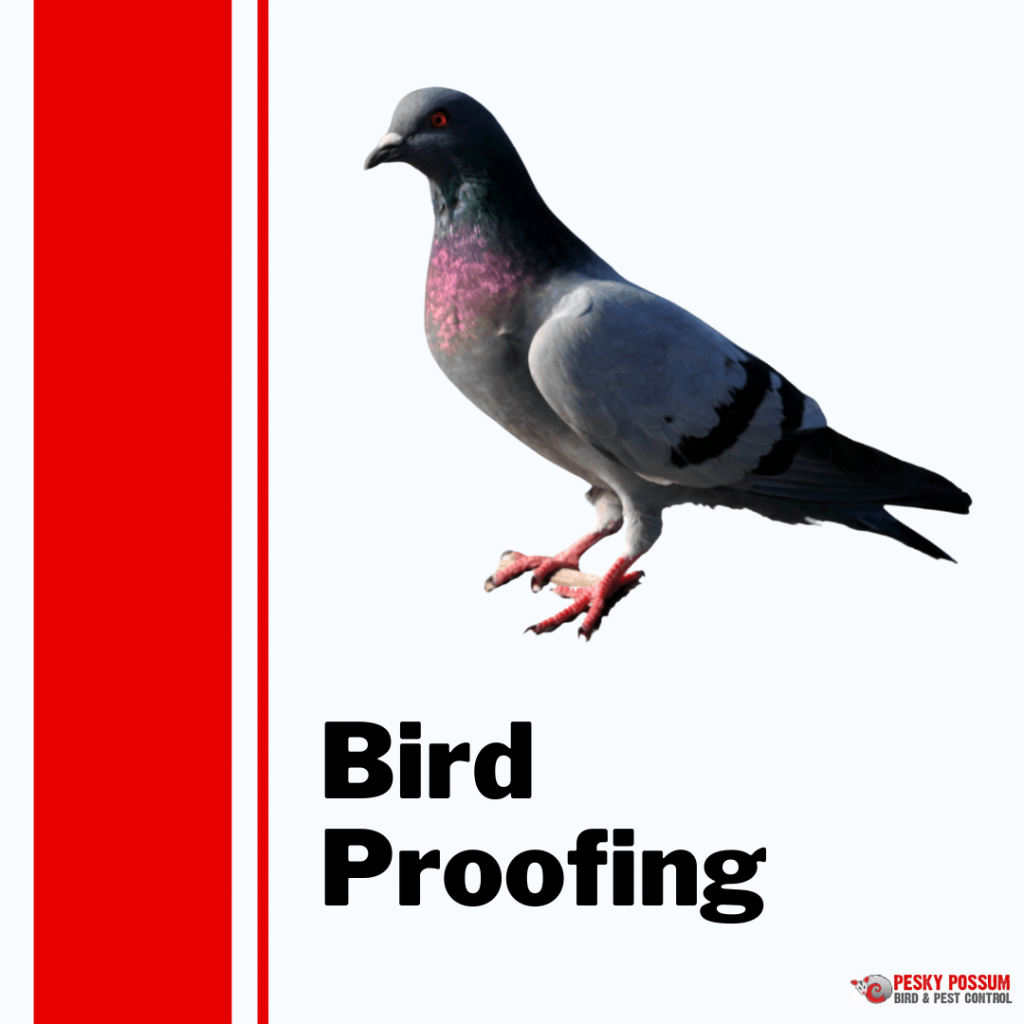 Pesky Possum Bird & Pest Control   Brisbane Bird Proofing
