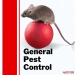 Brisbane pest control | Pesky Possum Bird & Pest Control