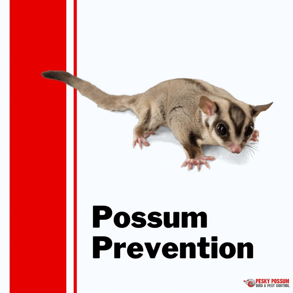 Brisbane possum removal