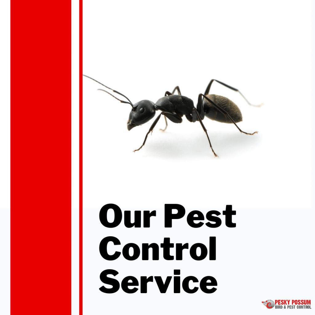 Brisbane pest control