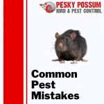Common Pest Mistakes | Pesky Possum Bird & Pest Control