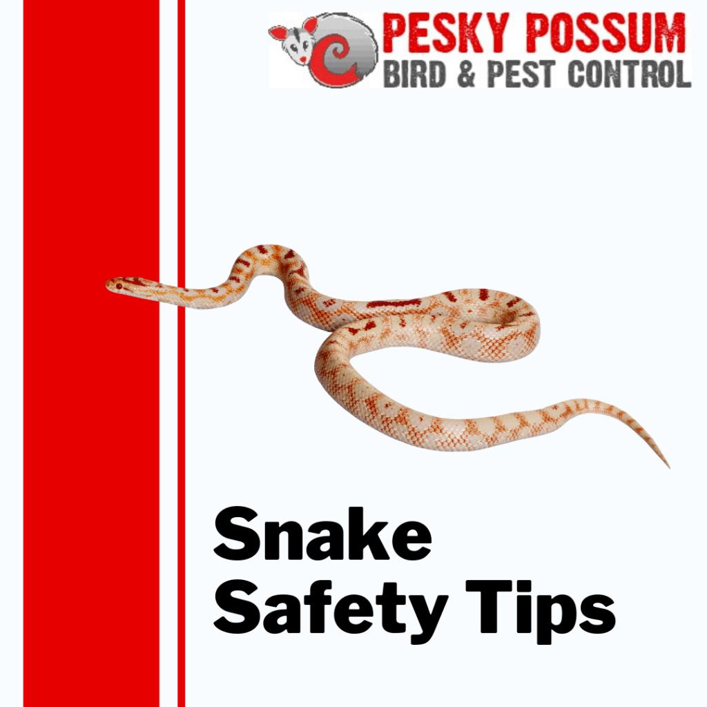 Snake Safety Tips | Pesky Possum Bird & Pest Control